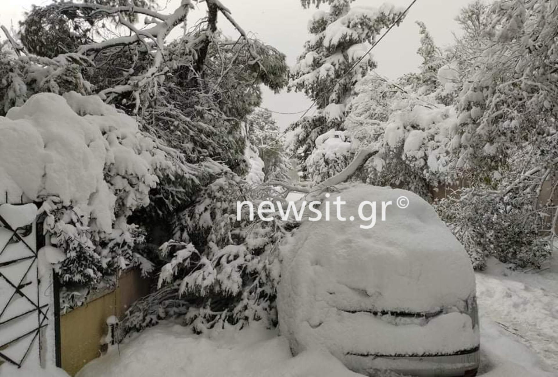 Καιρός – Κακοκαιρία Μήδεια: Δεκάδες πτώσεις δέντρων και σπίτια χωρίς ρεύμα (pics, video)