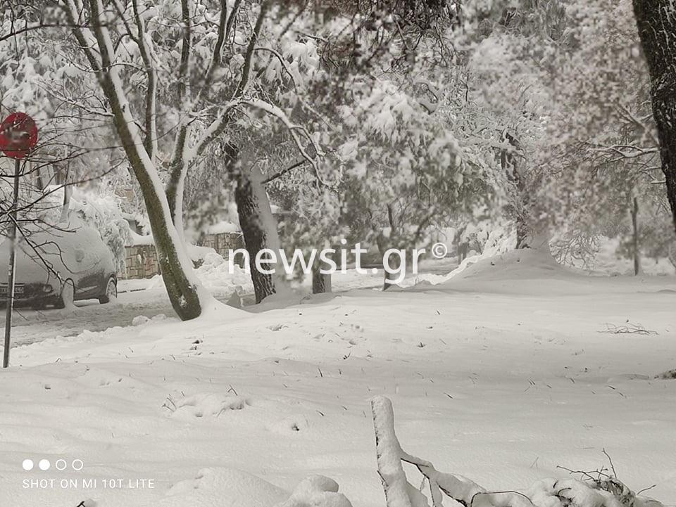 Κακοκαιρία Μήδεια: Βυθίστηκαν στο χιόνι Δροσιά, Σταμάτα και Άνοιξη