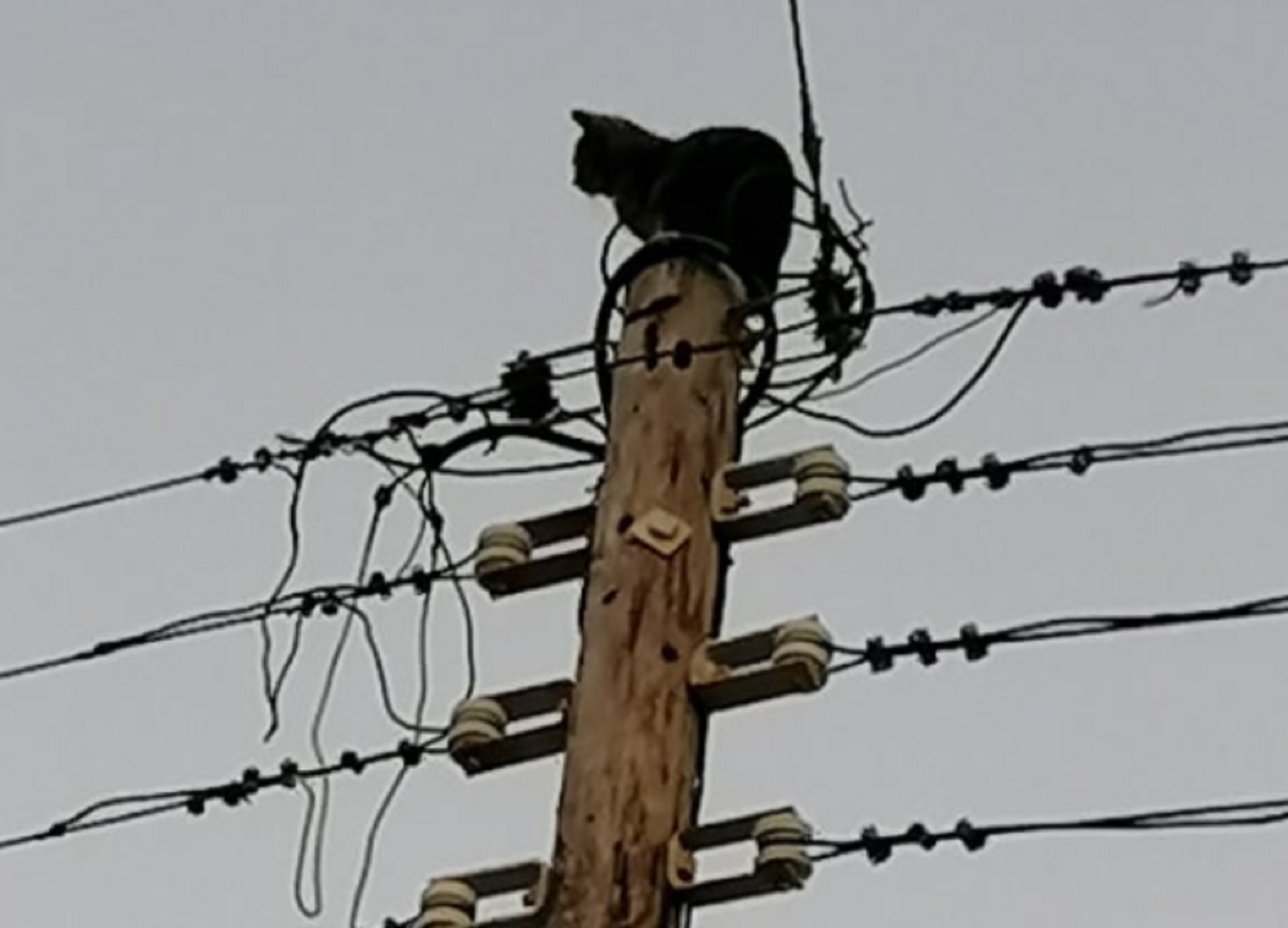 Σύρος: Η τρομαγμένη γάτα ούτε που το κατάλαβε – Δείτε τι έκανε για να αποφύγει τον σκύλο που την κυνηγούσε (pics)