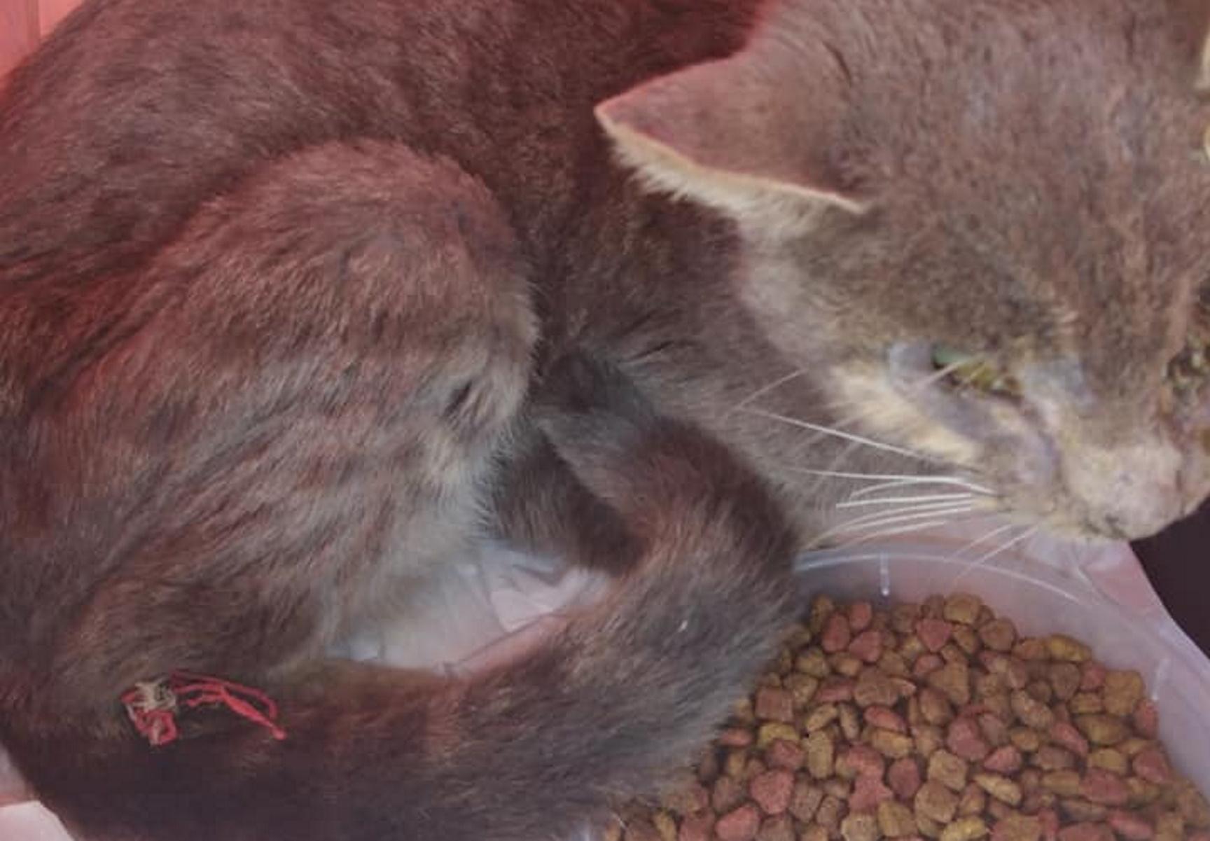 Κτηνωδία στην Κρήτη – Έβγαλαν τα μάτια γάτας και τη βασάνισαν