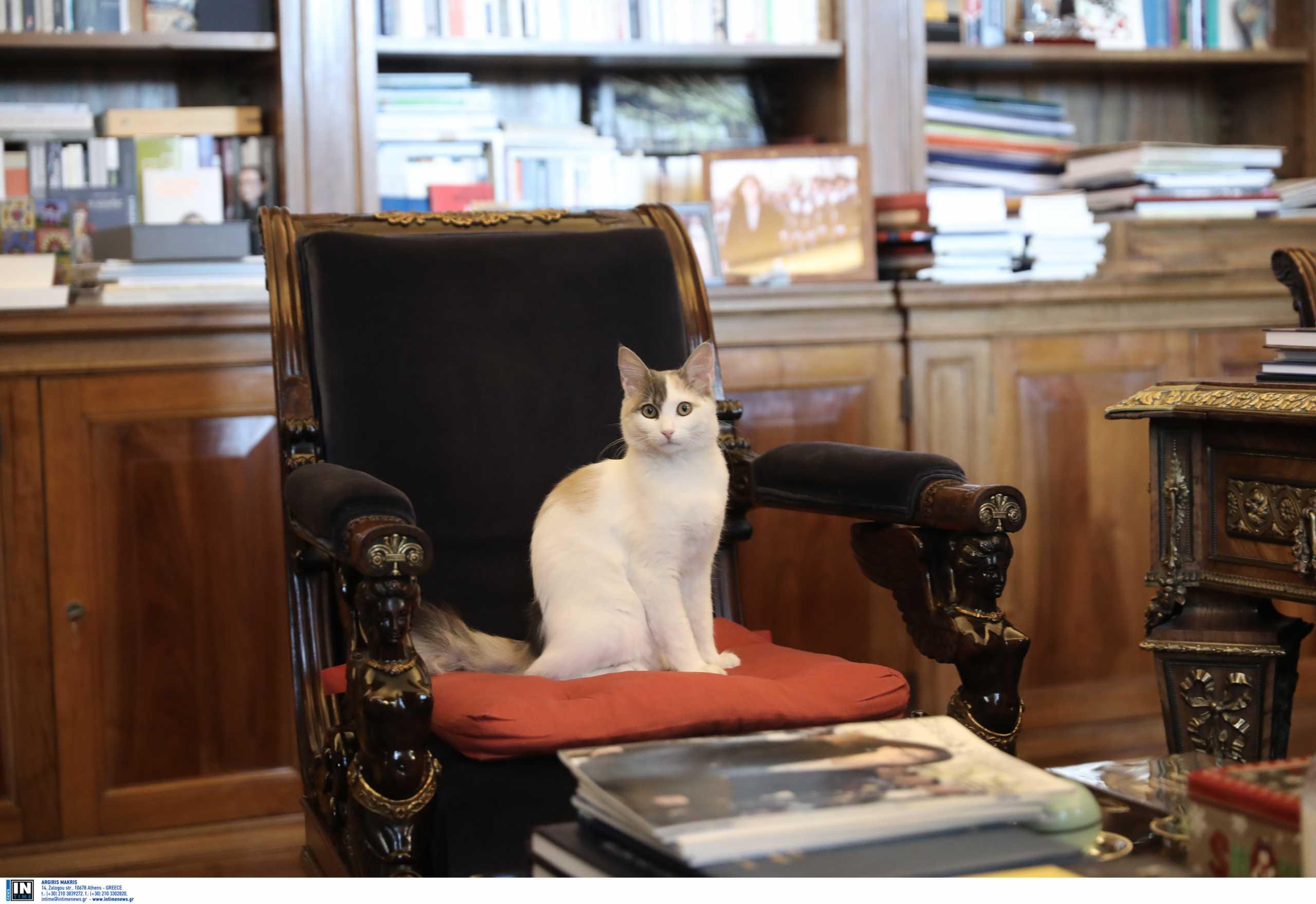 Υπολοχαγός «Καλυψώ»: Έκλεψε ξανά τις εντυπώσεις η γατούλα του Προεδρικού (pics)