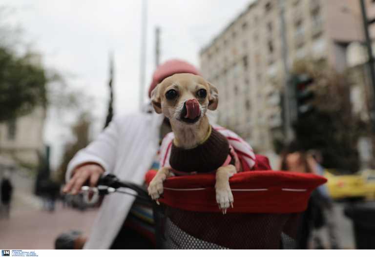 Ελληνικός Ερυθρός Σταυρός: Συγκρότησε «υπηρεσία περιπάτου για ζώα συντροφιάς» στη Θεσσαλονίκη