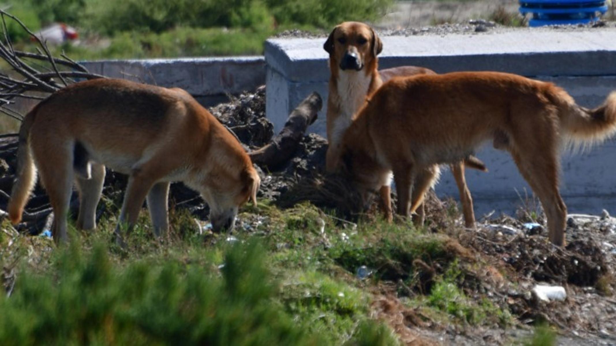 Κόρινθος: Αδέσποτο σκυλί δάγκωσε 8χρονο στο πρόσωπο