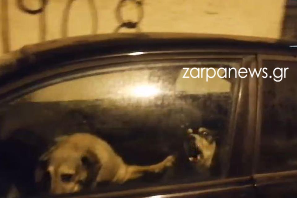 Χανιά: Κλείδωσε τρία σκυλιά μέσα σε αυτοκίνητο με κλειστά παράθυρα – Δείτε τις εικόνες που προκαλούν οργή (video)