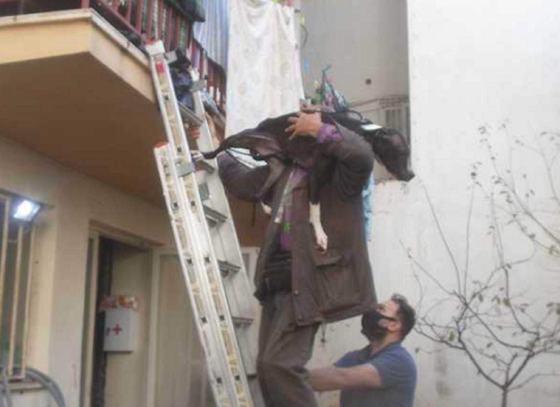 Καλαμάτα: Έτσι έσωσαν πίτμπουλ που είχαν εγκαταλείψει σε διαμέρισμα – Φοβισμένο αλλά πάντα φιλικό το ζώο (pics)