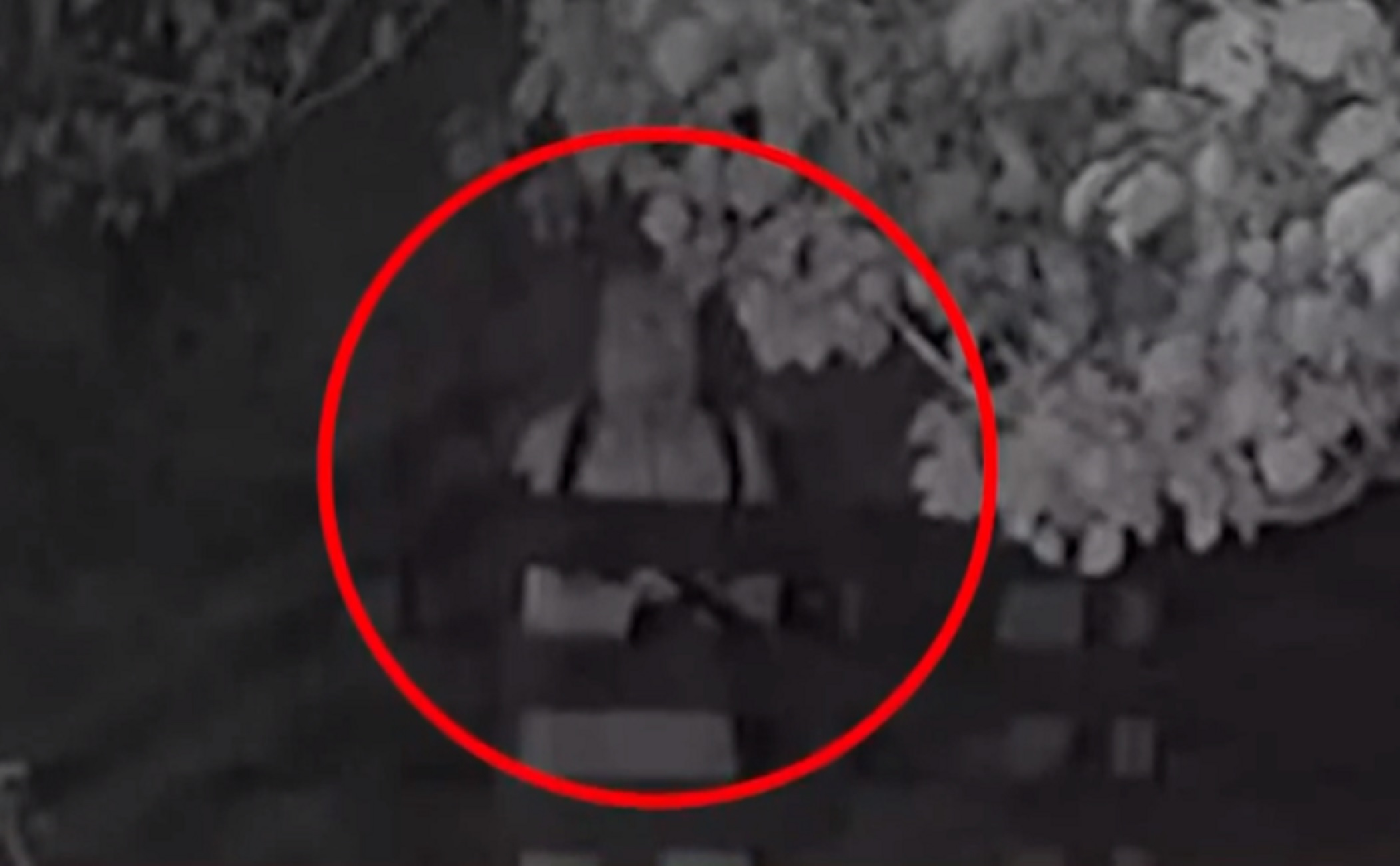 Βόλος: Ο τοξοβόλος επέστρεψε – Νέα επίθεση σε σκύλο που σώθηκε από θαύμα (video)