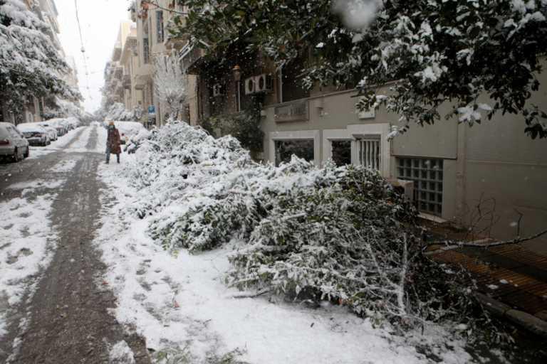 ΚΕΔΕ για διακοπές ρεύματος: Οι Δήμοι δεν έχουν ευθύνη για το κόψιμο των δέντρων