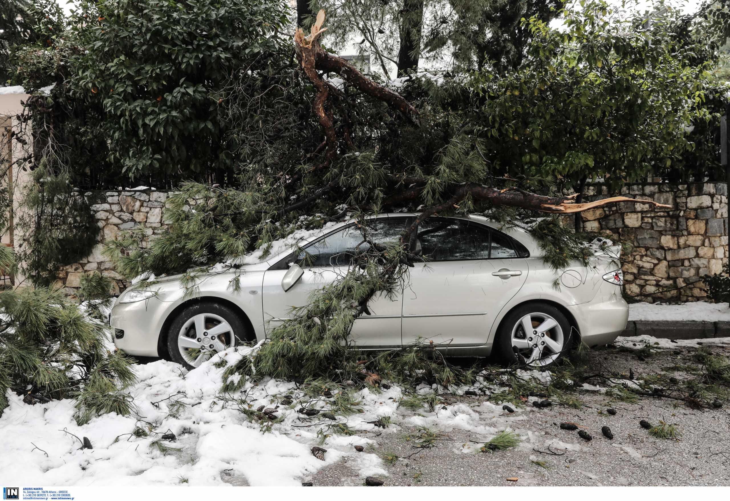 Κακοκαιρία Μήδεια: Αυτό το χιόνι ήταν... διαφορετικό! Γιατί έπεσαν εκατοντάδες δέντρα