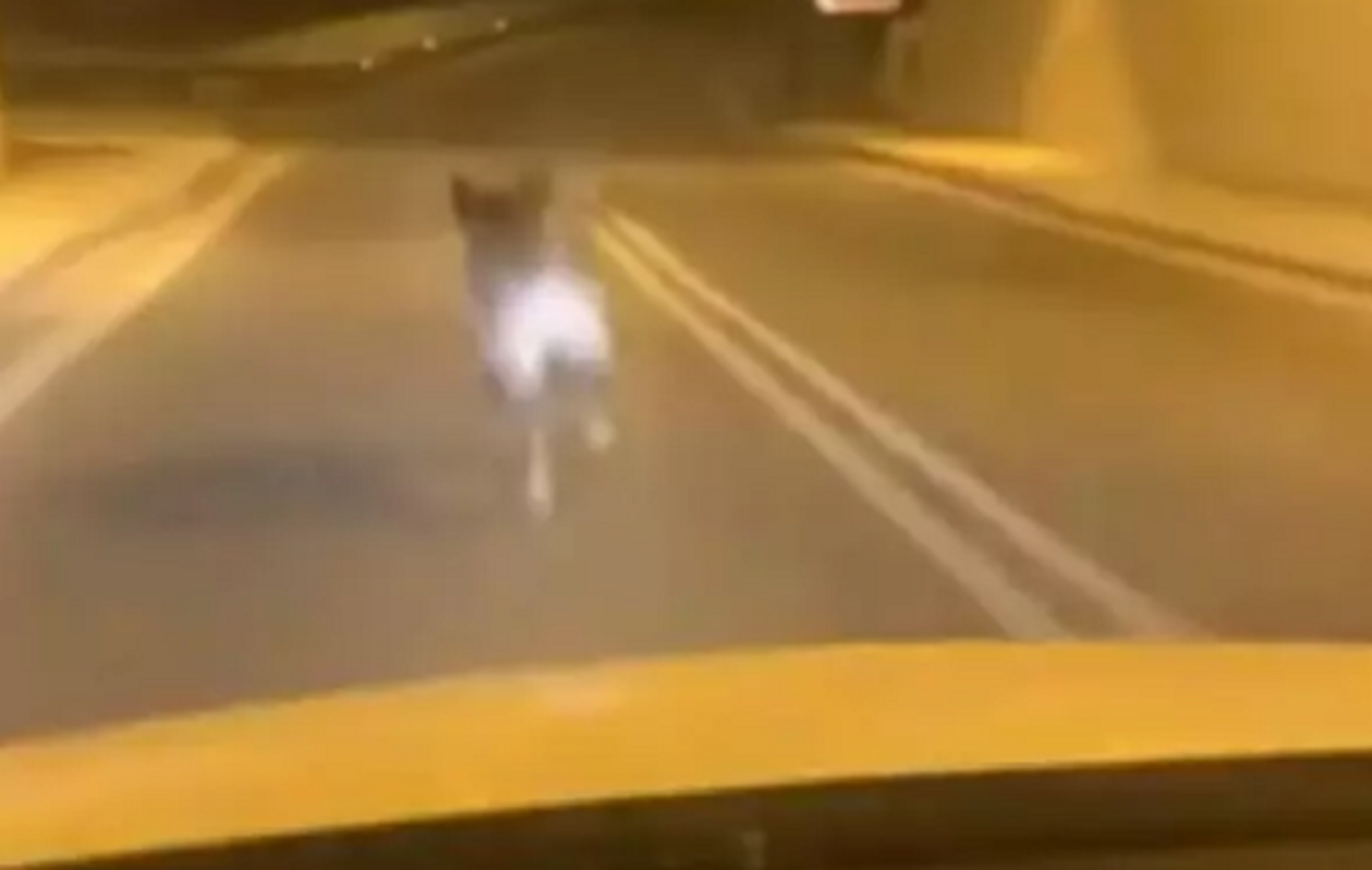 Εθνική Οδός: Το αγριογούρουνο που πηγαίνει σφαίρα – Κινείται πιο γρήγορα από το αυτοκίνητο (video)