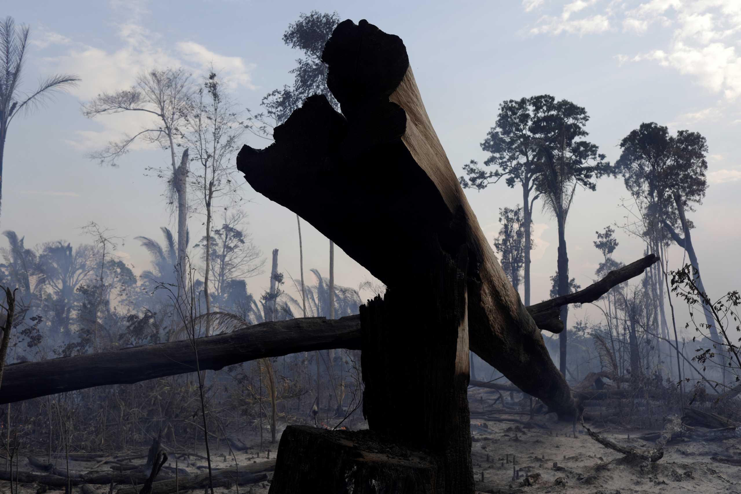 Τρομακτικά στοιχεία: Τα δύο τρίτα των τροπικών δασών έχουν καταστραφεί ή υποβαθμιστεί