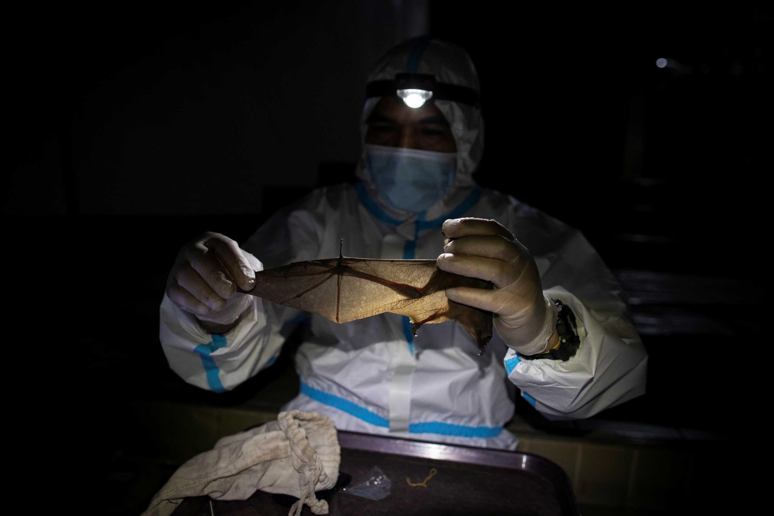 Κορονοϊός: Συγγενικός ιός βρέθηκε σε νυχτερίδες στην Καμπότζη