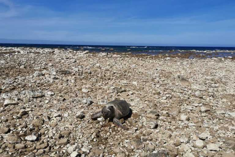 Χανιά: Νεκρή χελώνα Caretta-Caretta στο Ενετικό Λιμάνι (pics)