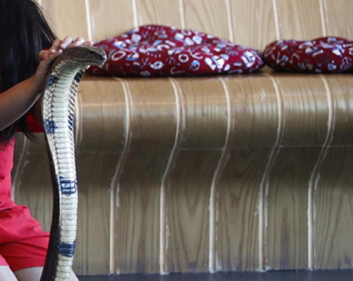 Παλεύει στην Εντατική ο συλλέκτης φιδιών που δαγκώθηκε από την ινδική κόμπρα του