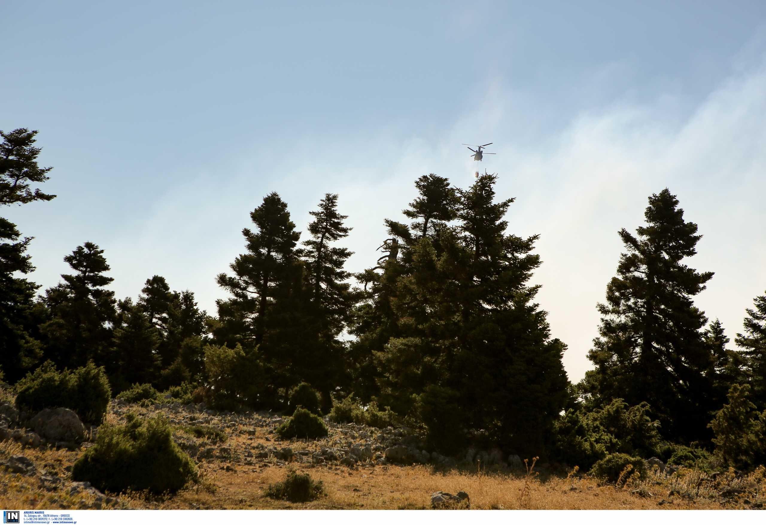 Γ. Αμυράς: Πάνω από 79 εκατ. ευρώ για πρόληψη και αποκατάσταση ζημιών σε δάση