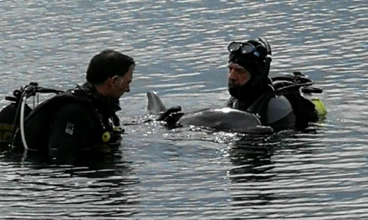 Δελφίνια στο Λουτράκι ζητούσαν βοήθεια για παγιδευμένο φίλο τους (video)