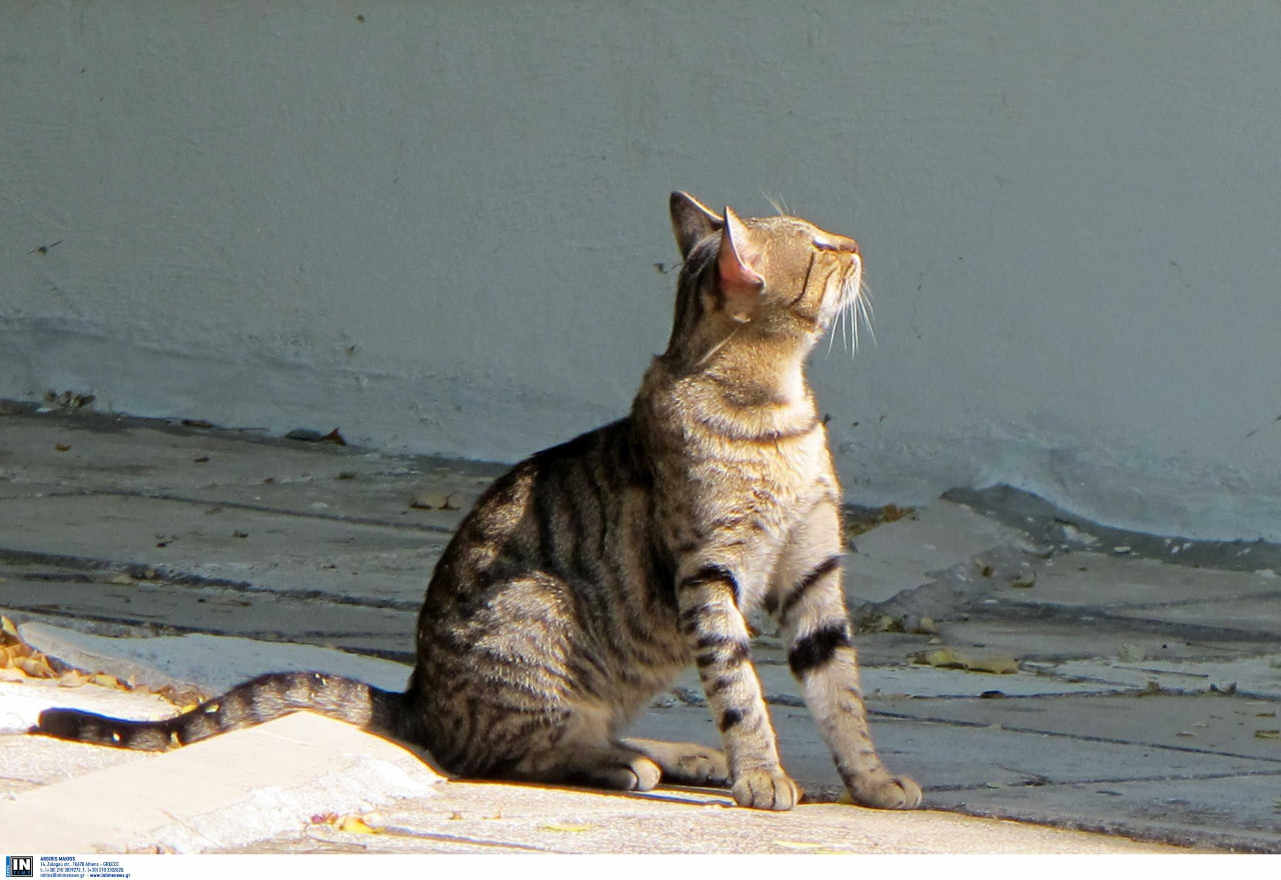 Γάτος τρώει επική τούμπα στην προσπάθεια να ξεκολλήσει το κεφάλι του από μία σακούλα!