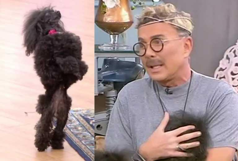 Λάκης Γαβαλάς: Ο σκύλος του έκανε απίθανη χορογραφία στον αέρα