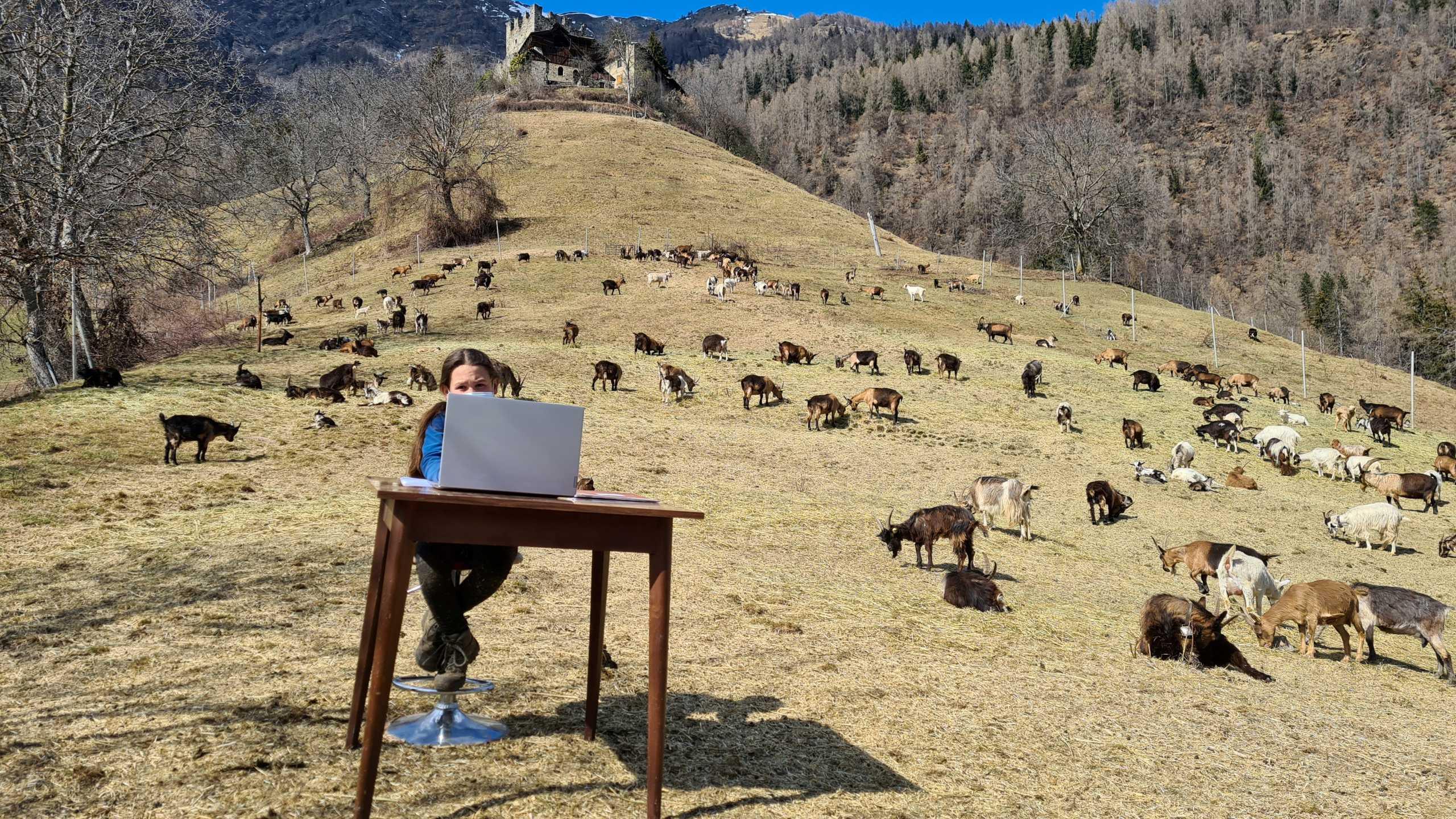 Η 10χρονη βοσκοπούλα που κάνει τηλεκπαίδευση στα βουνά (pics)