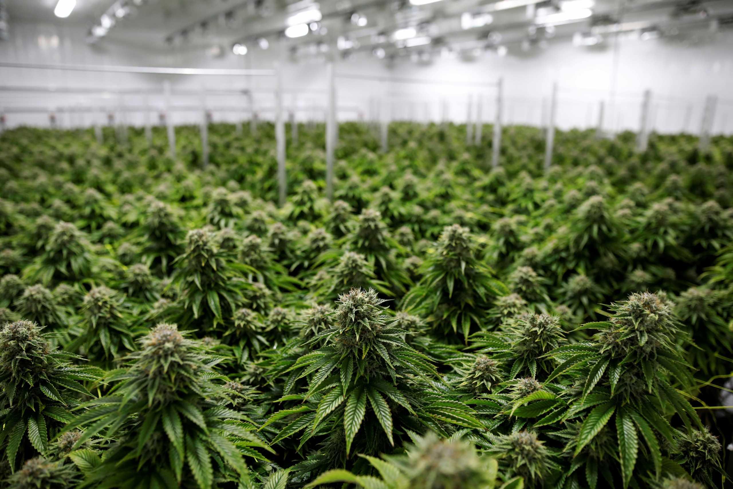 Μαριχουάνα… non stop στη Νέα Υόρκη: Νόμιμη η χρήση και για ψυχαγωγικούς σκοπούς