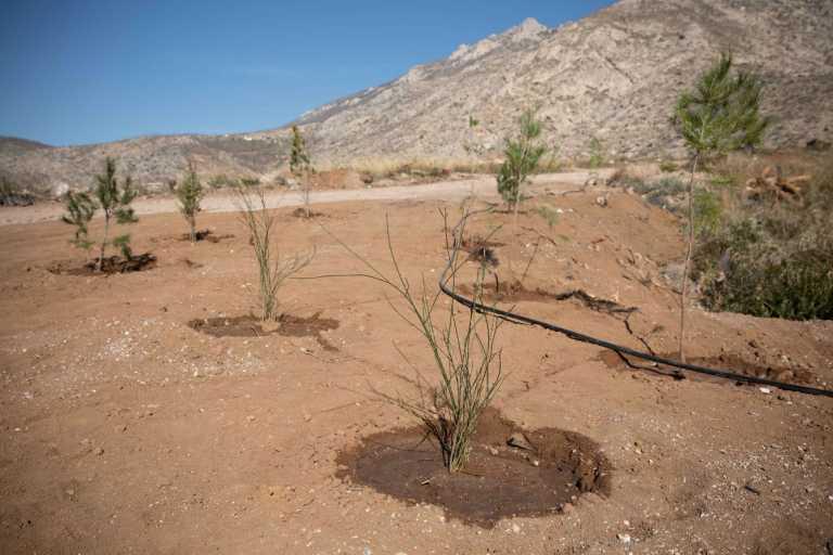Γ. Βαρδινογιάννης για την αναδάσωση στην Κινέτα από την Motor Oil: «Φυτεύοντας μαζί δίνουμε ζωή»