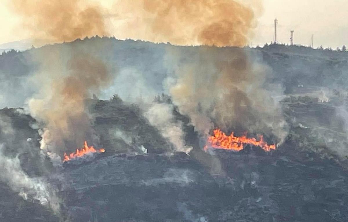 Φωτιά στον Κάλαμο Ωρωπού (video)