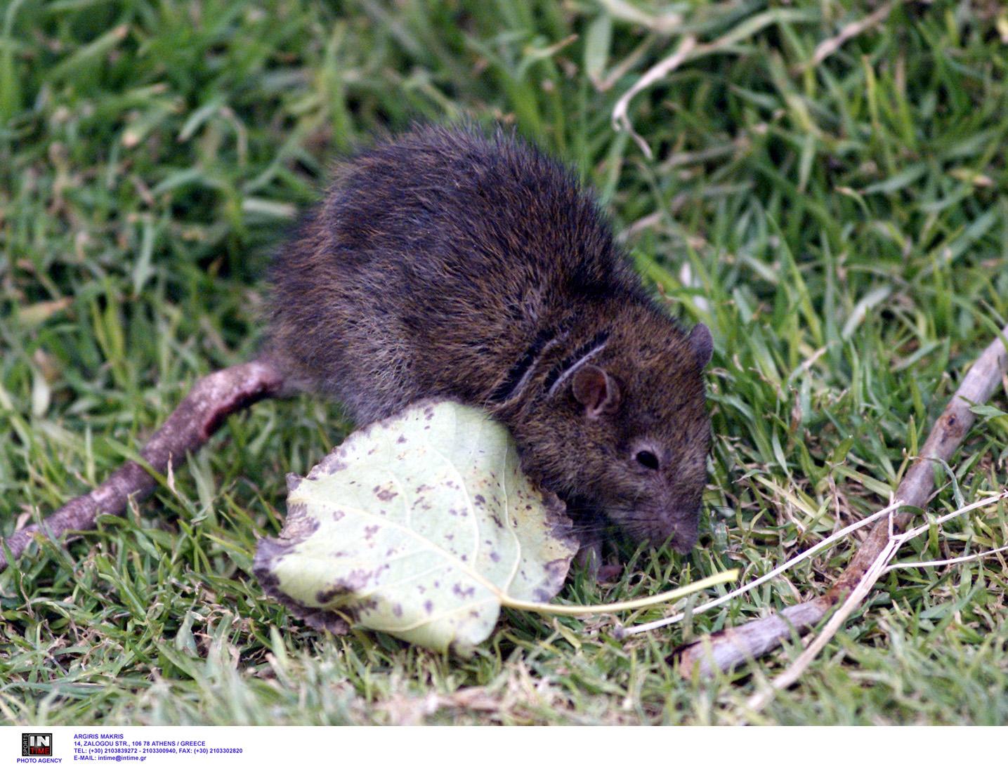 Επιστήμονες μεγάλωσαν έμβρυα ποντικιών μέσα σε τεχνητή μήτρα (vid)