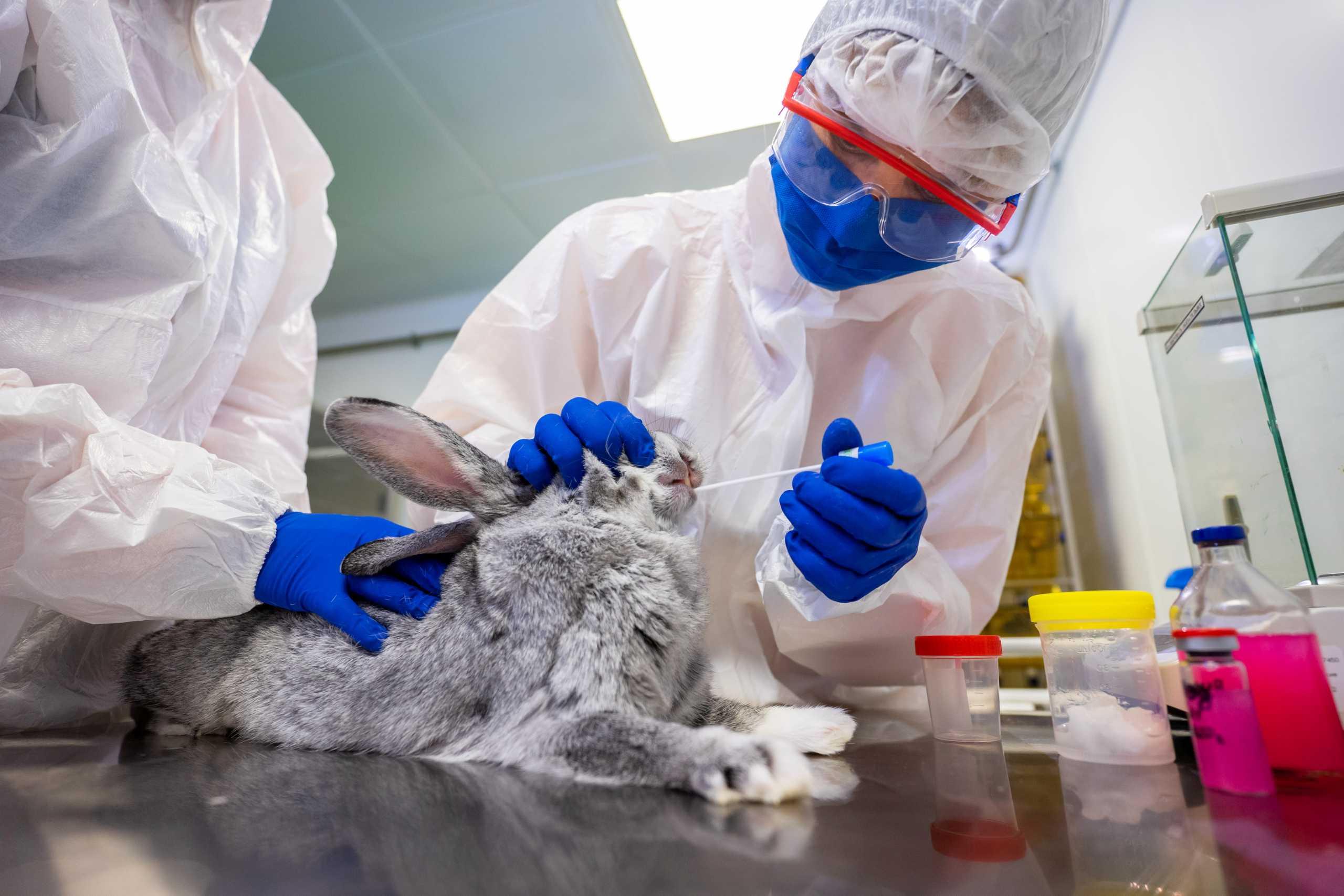 Κορονοϊός: Από τη Μόσχα με αγάπη το πρώτο εμβόλιο κατά της Covid-19 για ζώα