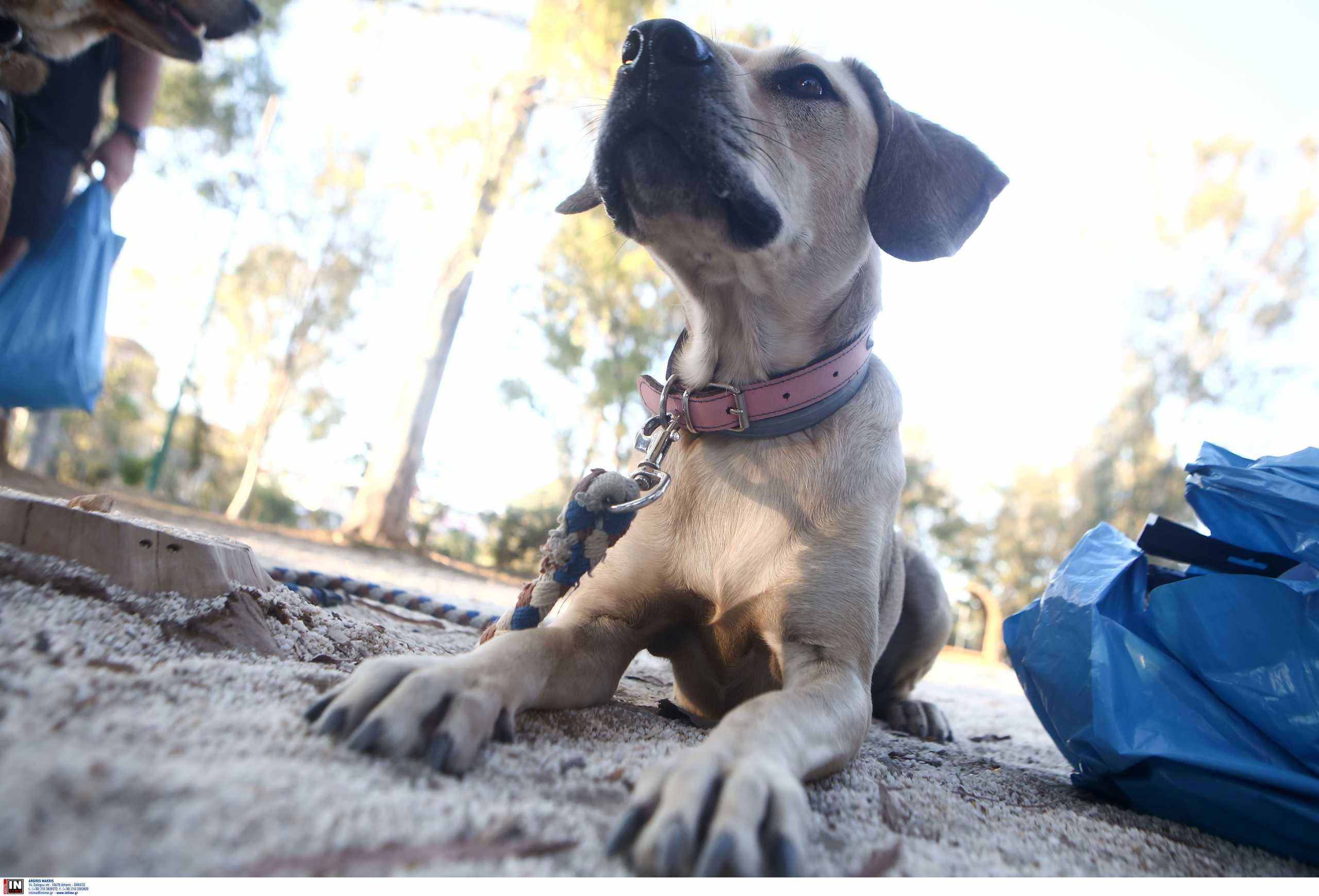 Πάτρα: Αστυνομικοί έσωσαν σκυλί που «σφάδαζε» στη μέση του δρόμου