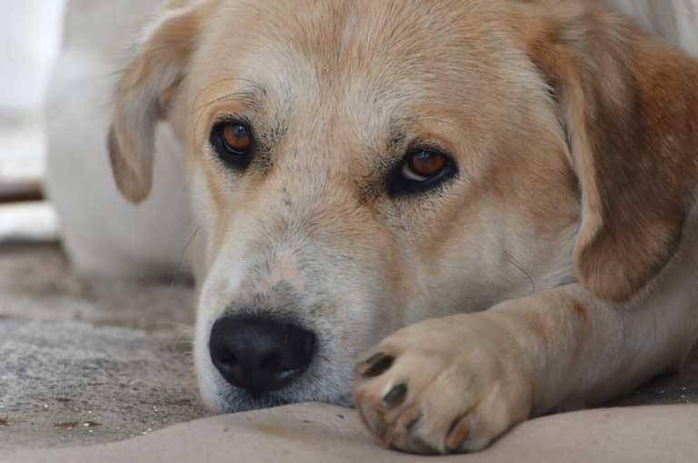 Κόρινθος: Αρρωστημένη εξόντωση σκύλων με φόλες - Οργή για τις σκληρές εικόνες στην περιοχή (video)