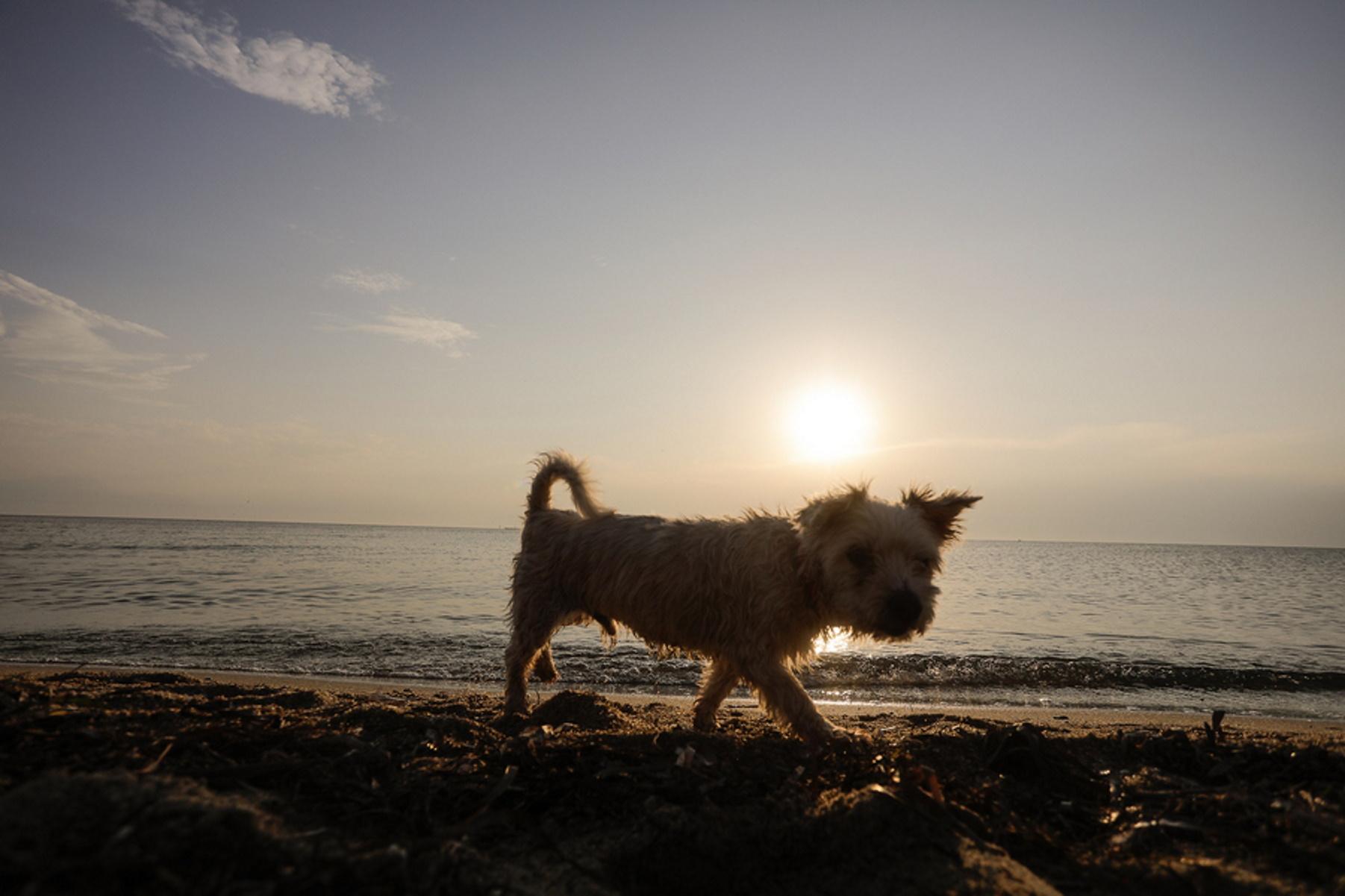 Κορονοϊός: Συχνή η μετάδοση σε σκύλους και γάτες