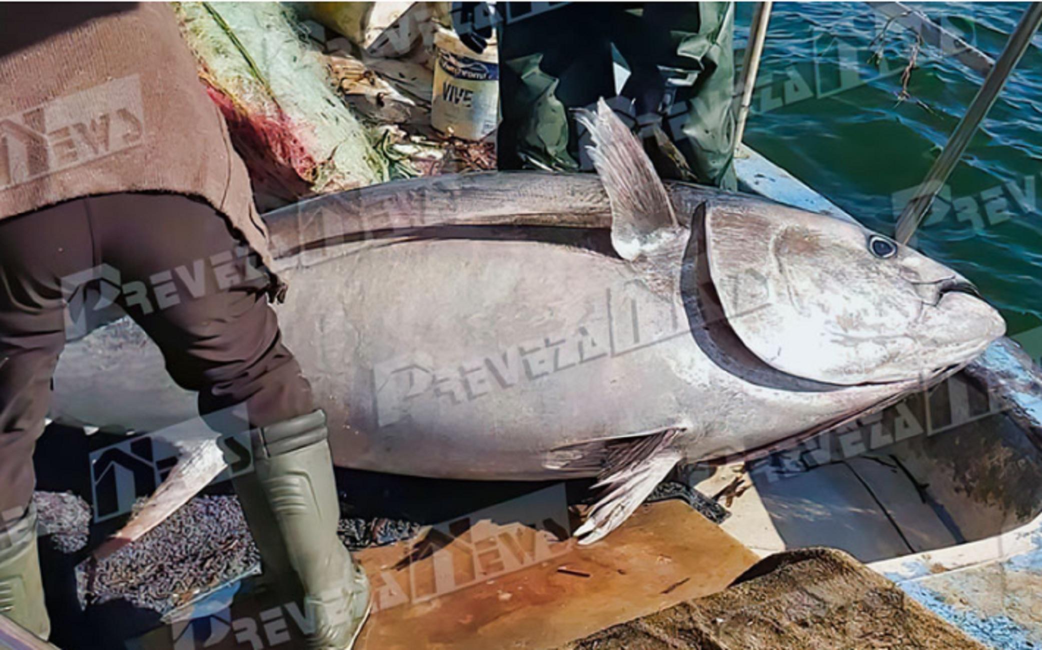 Πρέβεζα: Δεν είναι μοντάζ αλλά το ψάρι που έπιασαν – Φράκαρε το καϊκι μόλις το σήκωσαν (pics)