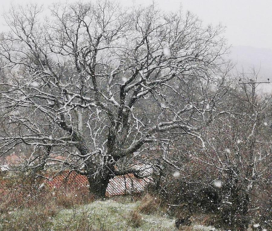 Καιρός – Θεσσαλονίκη: Χιονίζει σε Ωραιόκαστρο, Χορτιάτη και Πανόραμα – Βουτιά της θερμοκρασίας (pic)