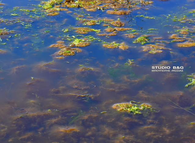 Απίστευτες εικόνες: Παραλία στην Αργολίδα… κοκκίνισε