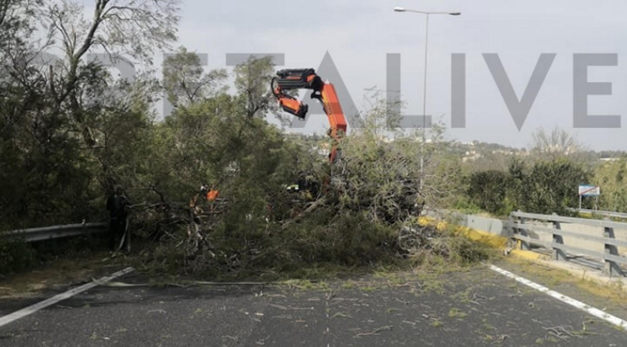 Καιρός – Κρήτη: Μεγάλο δέντρο έκλεισε την εθνική οδό – Θυελλώδεις άνεμοι σαρώνουν το νησί (pics)