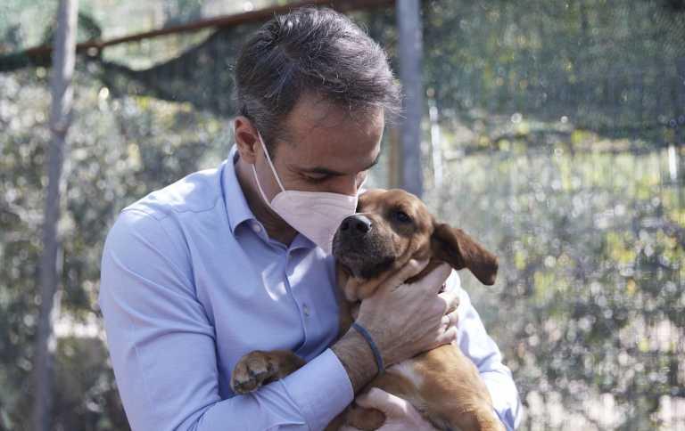 Μητσοτάκης από το καταφύγιο ζώων Ηλιούπολης: Αγκαλιάστε και σώστε ένα αδέσποτο (pics, vid)