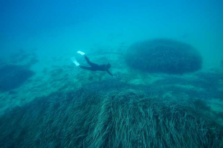 KORRES και Ινστιτούτο Θαλάσσιας Προστασίας Αρχιπέλαγος