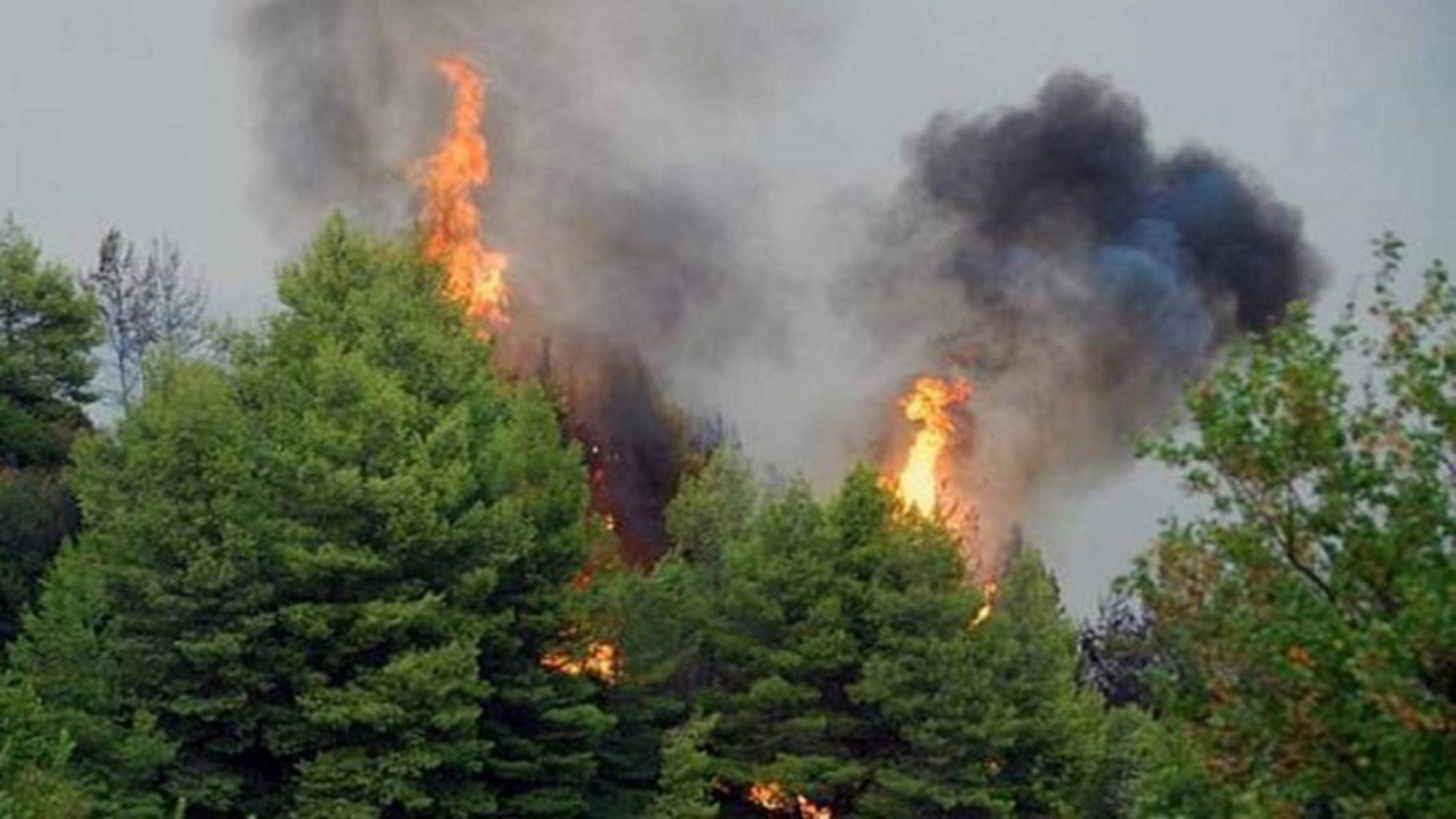 Φωτιά στη Λακωνία