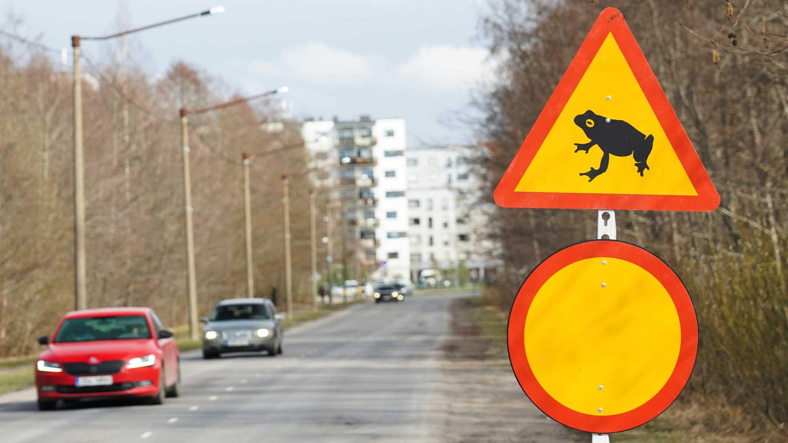 Εσθονία: Κλείνει δρόμος τα βράδια για να περνούν οι βάτραχοι στην άλλη πλευρά και να ζευγαρώσουν (pics,vid)