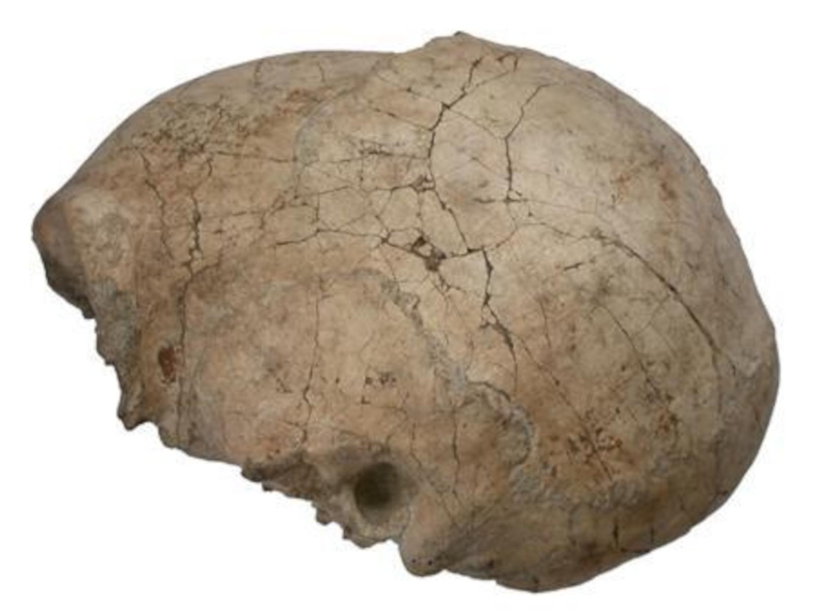 Ανατροπή σε όσα πιστεύαμε! Ο εγκέφαλος του Homo Erectus μάλλον υπήρχε.. πριν τον Homo Erectus