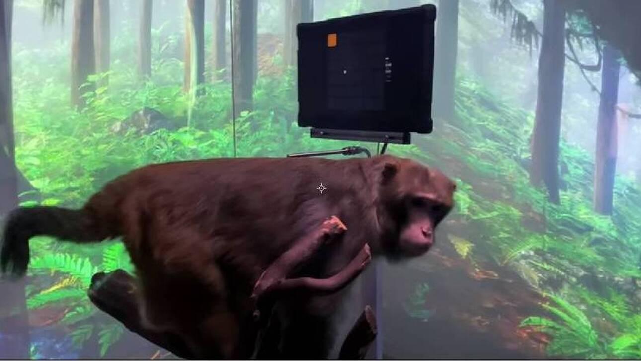 Ο Έλον Μασκ παρουσιάζει μαϊμού να παίζει βιντεοπαιχνίδι… με το νου της (vid)