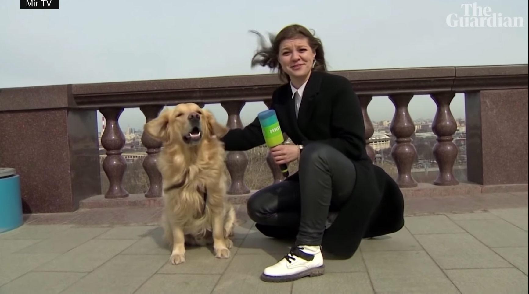 Σκυλάκος «κλέβει» το μικρόφωνο ρεπόρτερ σε live μετάδοση! Video