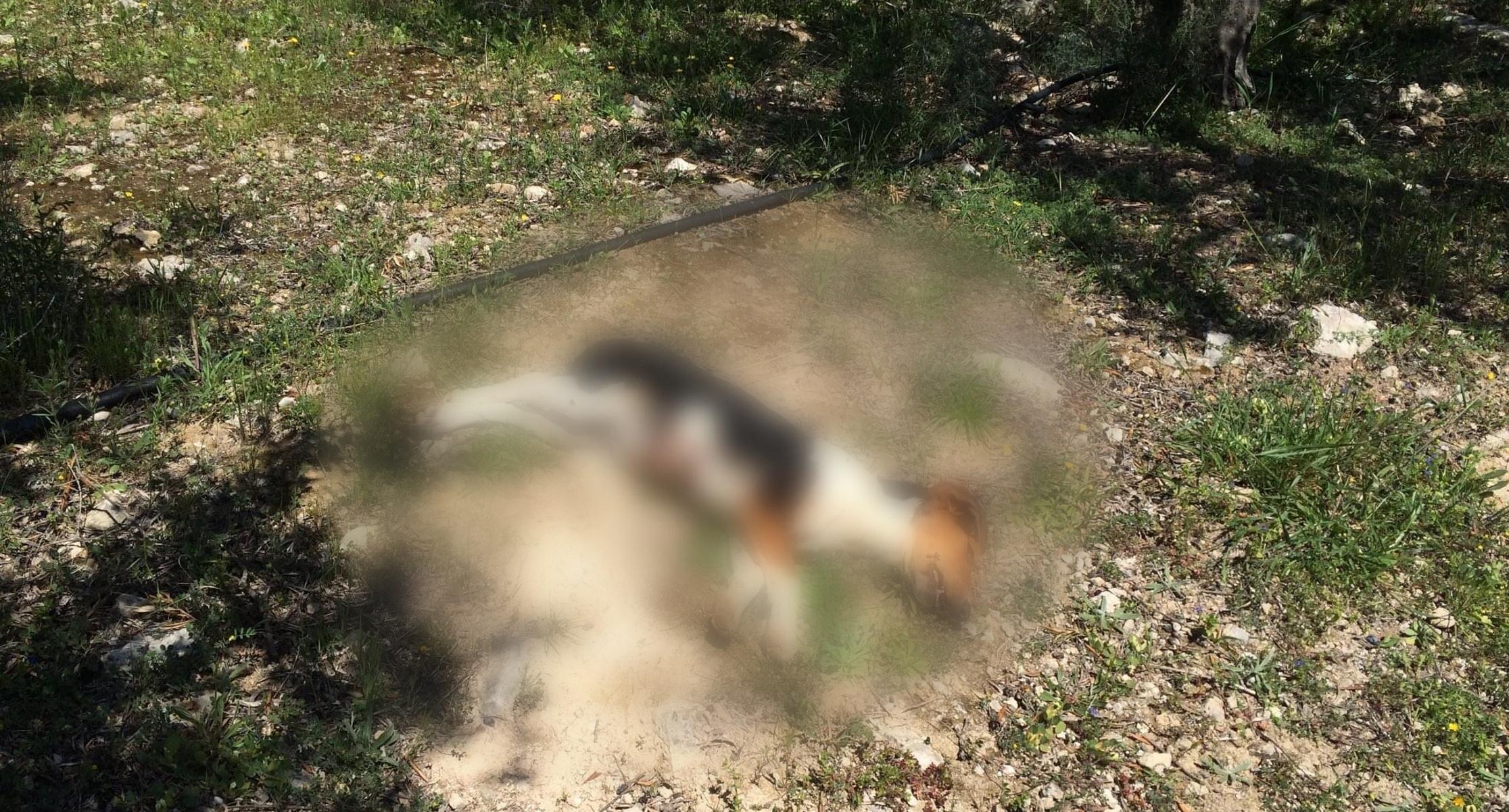 Κρήτη: Νέα κτηνωδία – Πυροβόλησε και σκότωσε σκυλάκι αφού πρώτα το βασάνισε