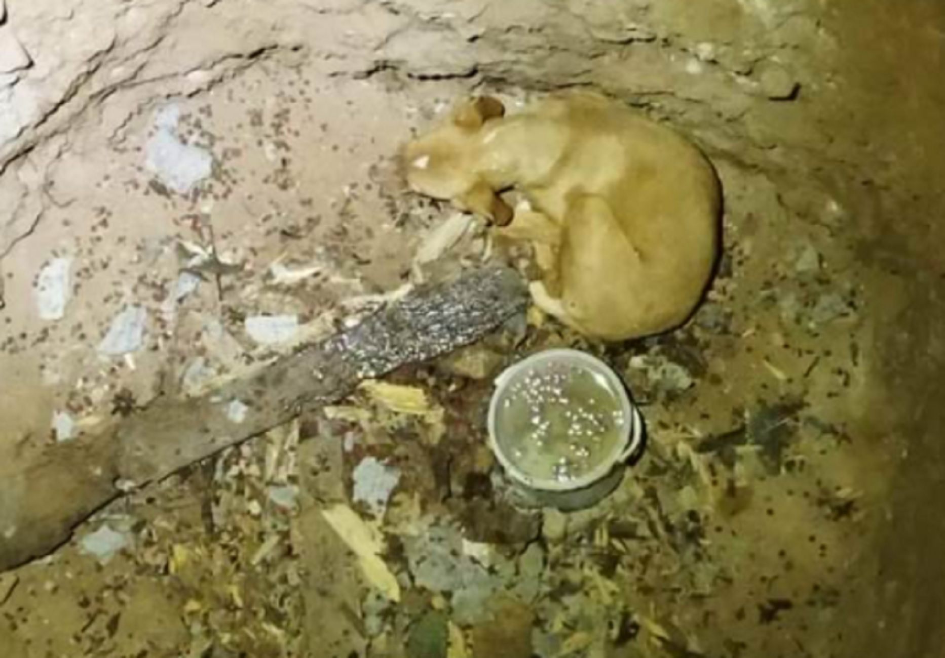 Κοζάνη: Δραματική διάσωση σκύλου που έπεσε σε αυτό το πηγάδι – Ο Ράιαν είναι ξανά χαρούμενος (pics)