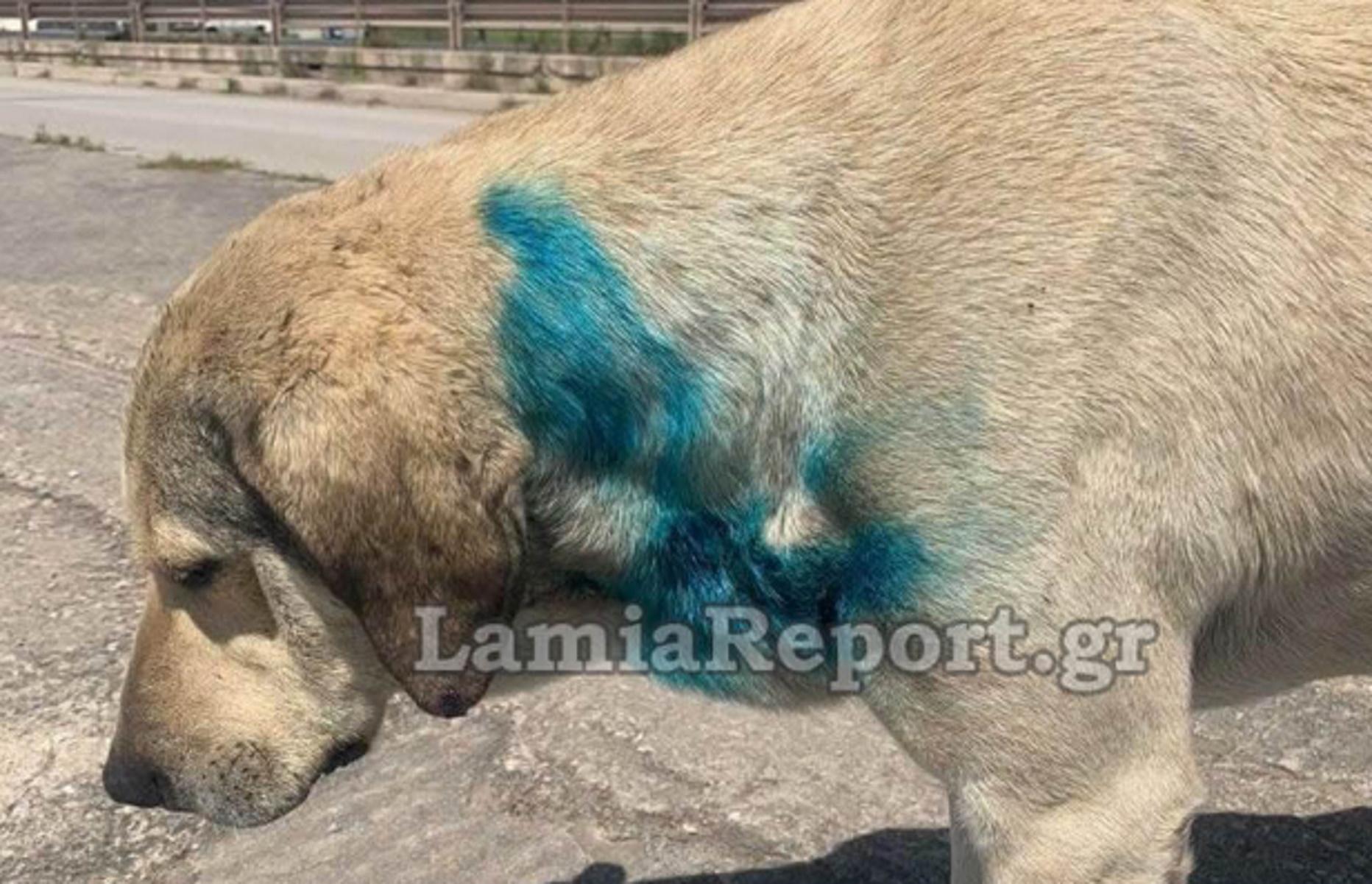 Στυλίδα: Aδέσποτος σκύλος έκανε αίσθηση λόγω χρώματος – Η πρώτη εντύπωση ήταν λάθος (pics)