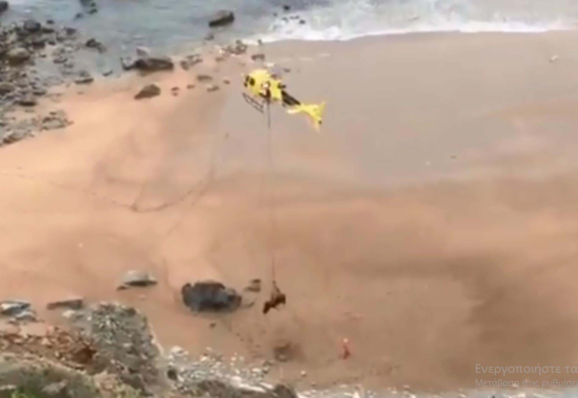 Ισπανία: Απίστευτη διάσωση από αέρος ενός ταύρου 800 κιλών