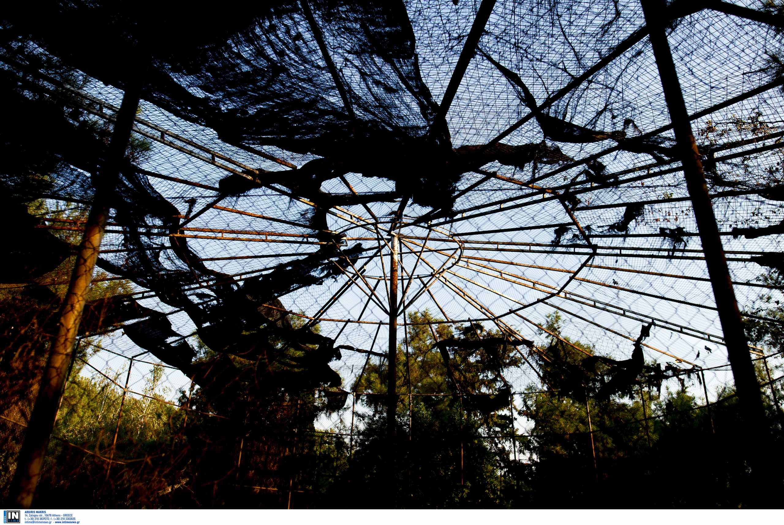 Συναγερμός για λεοπάρδαλη που κυκλοφορεί ελεύθερη αφού το έσκασε από ζωολογικό κήπο της Κίνας