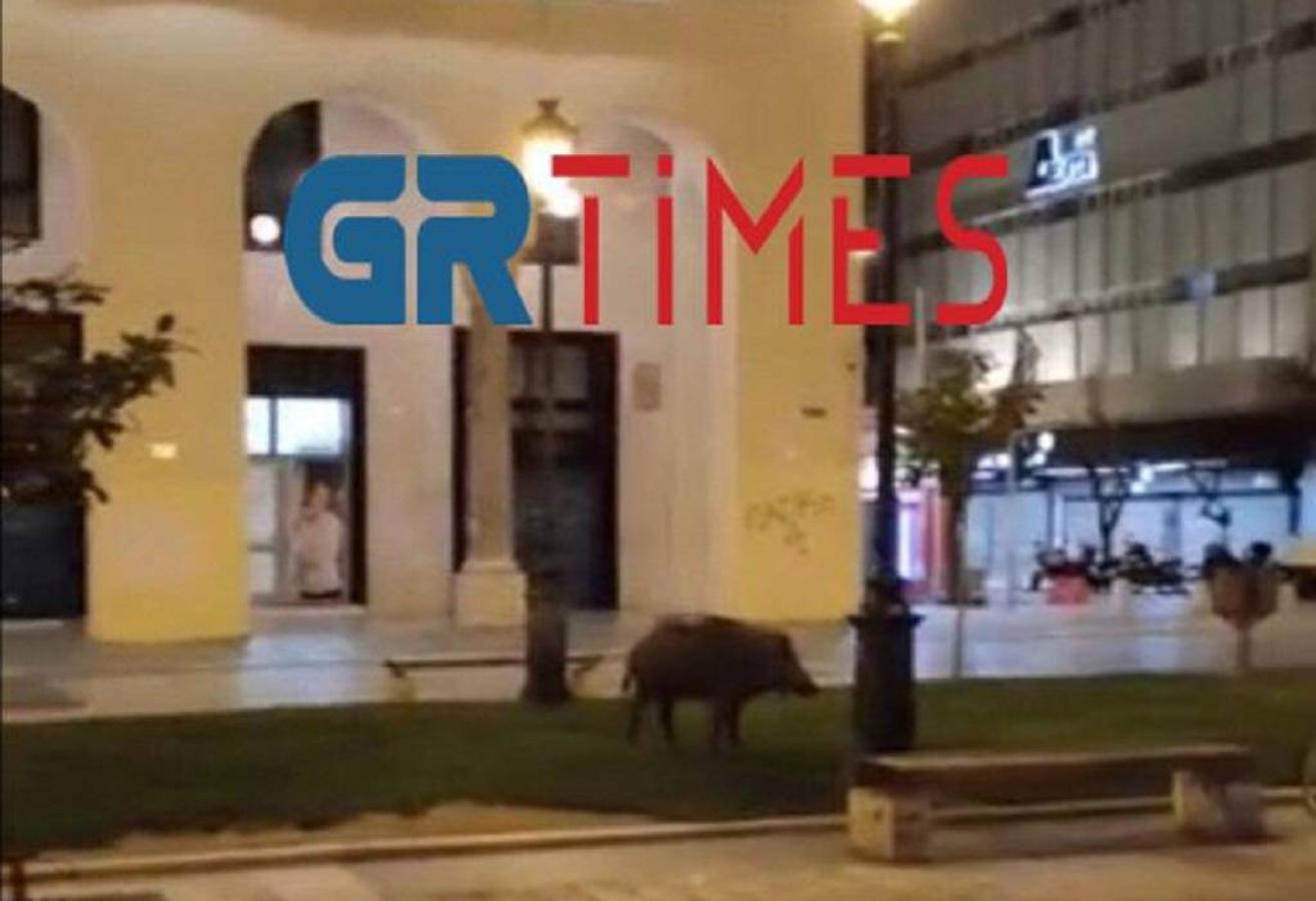 Θεσσαλονίκη: Παίρνει «όπλο» ο δήμος μετά την εμφάνιση αγριογούρουνων