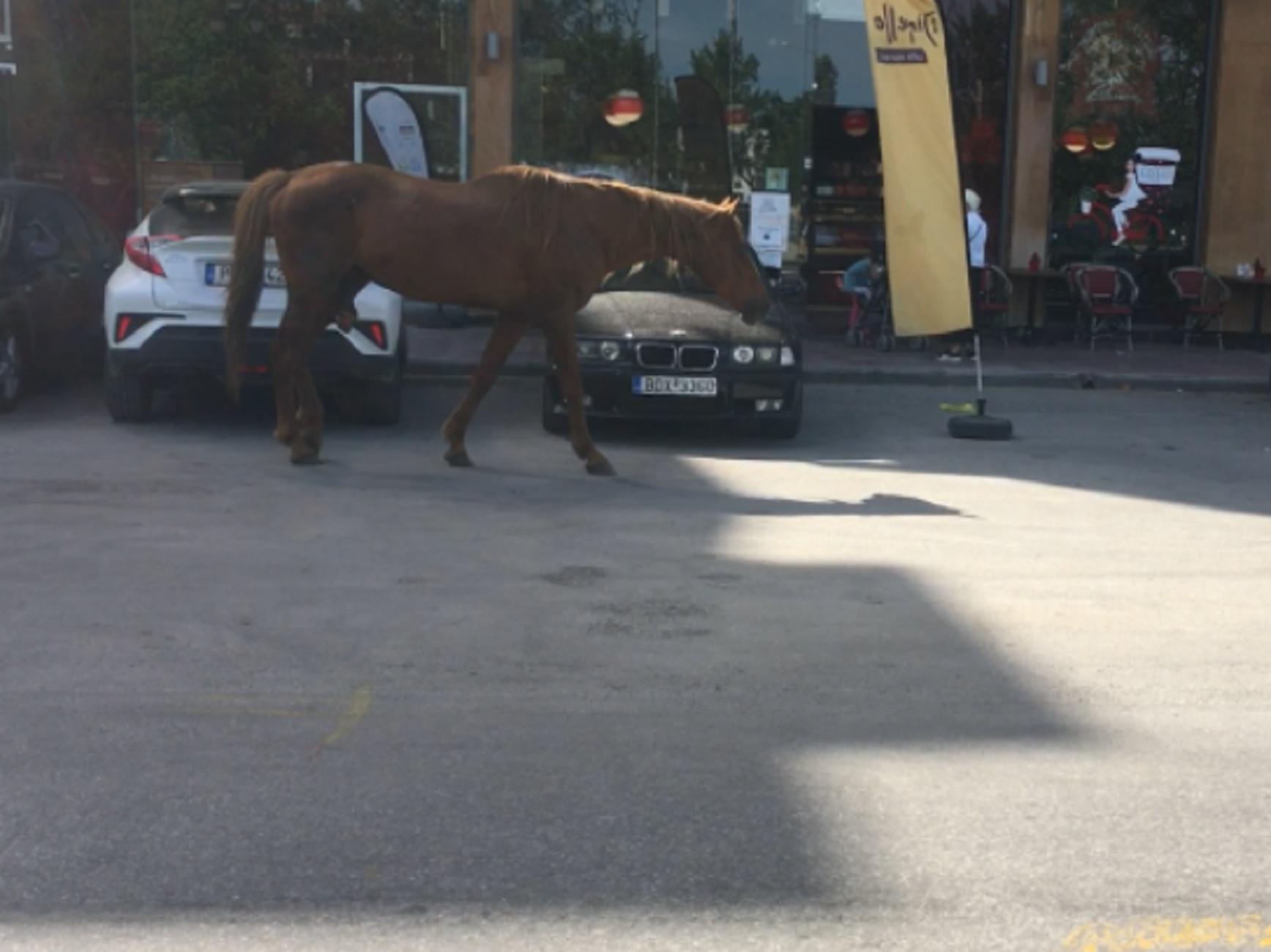 Λάρισα: Οι εικόνες της ημέρας – Άλογο έφτασε σε πλανώδιο πωλητή για φρούτα και λαχανικά (video)