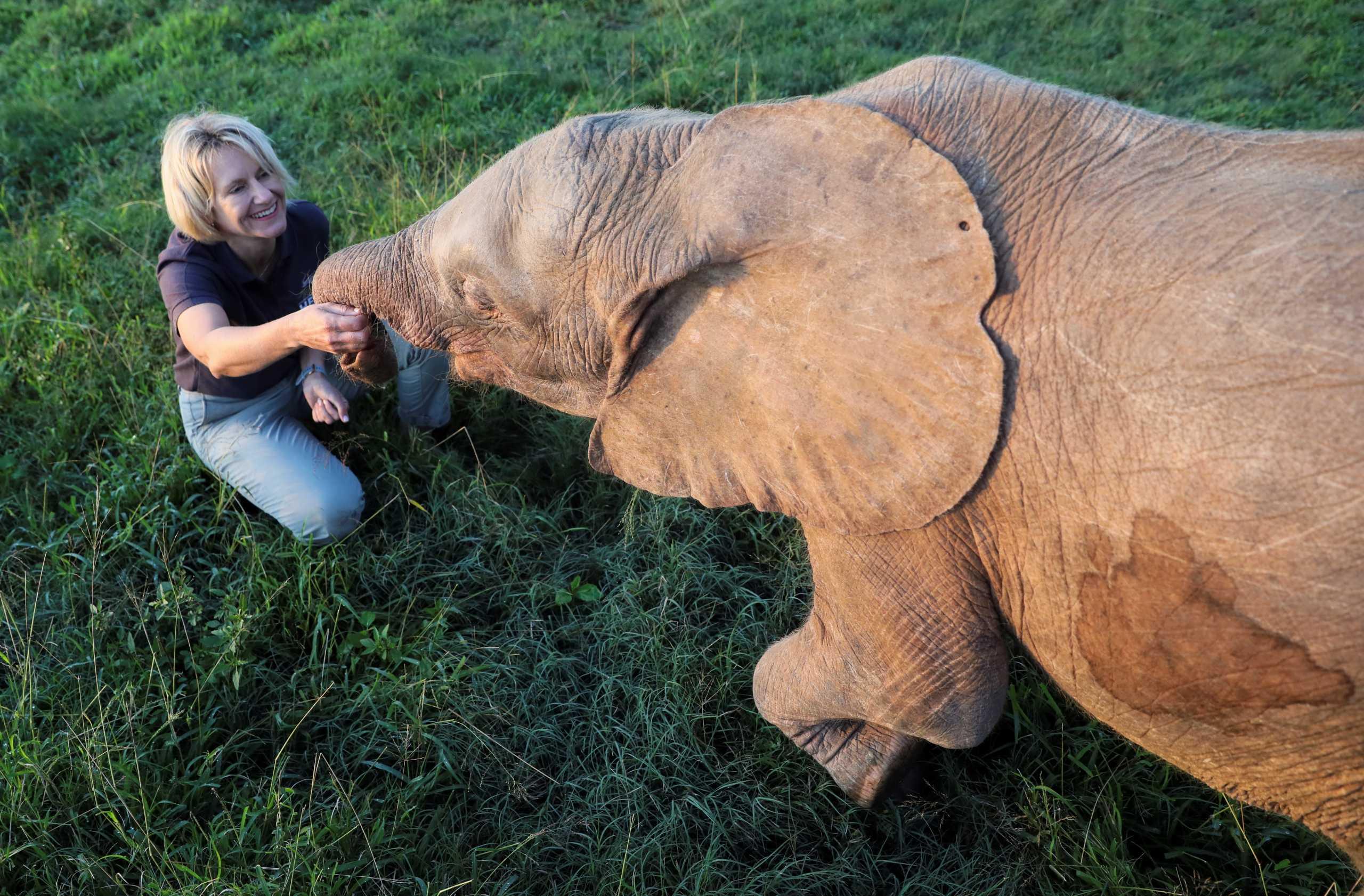 Νότια Αφρική: Αλμπίνα ελεφαντίνα επέζησε από την παγίδα των λαθροθηρών και μεγαλώνει σε καταφύγιο