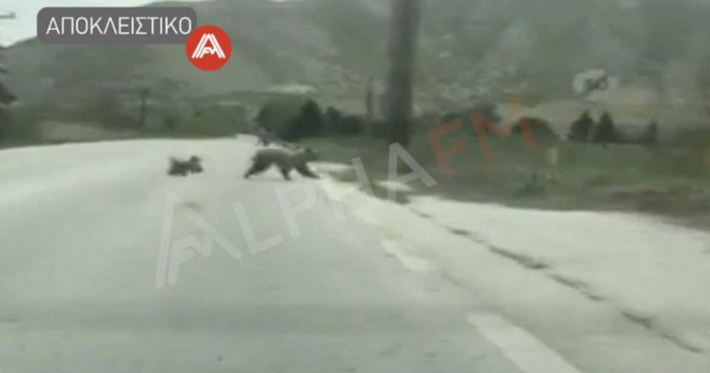 Καστoριά: Κατηφόρισαν πάλι οι αρκούδες κι έγινε χαμός (video)